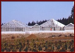 Commercial Greenhouse by Backyard Greenhouses