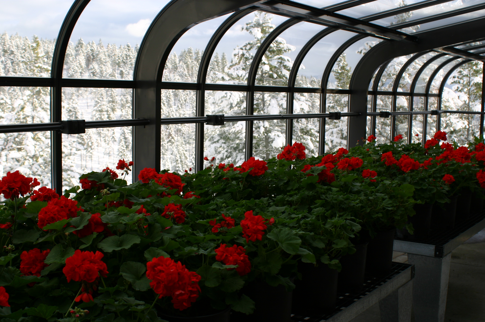 Backyard Greenhouse Winter : At Backyard Greenhouses we offer over 8,000 greenhouse models and
